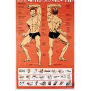 Training Posters